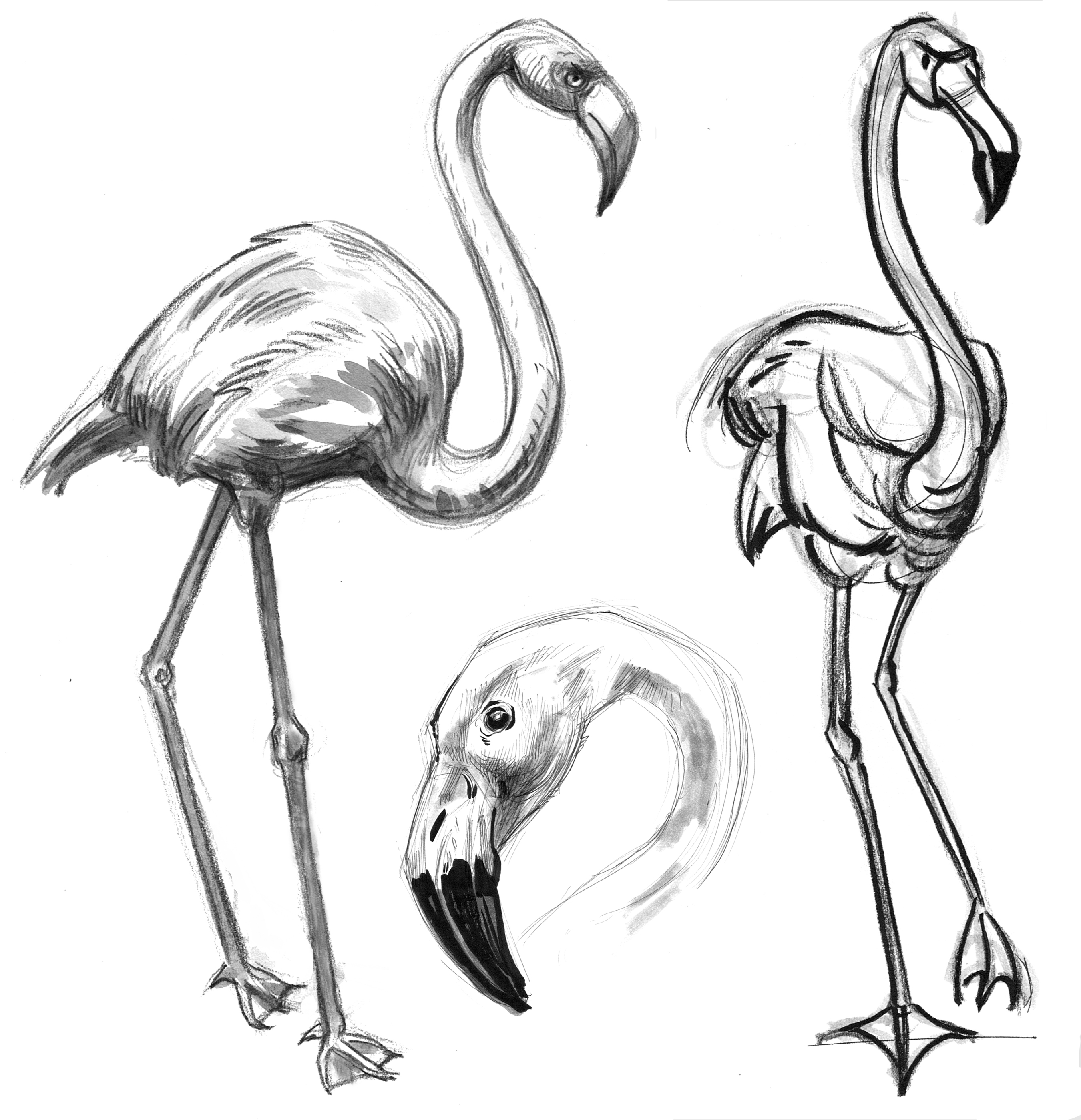 Bird Flamingo 2 & Head
