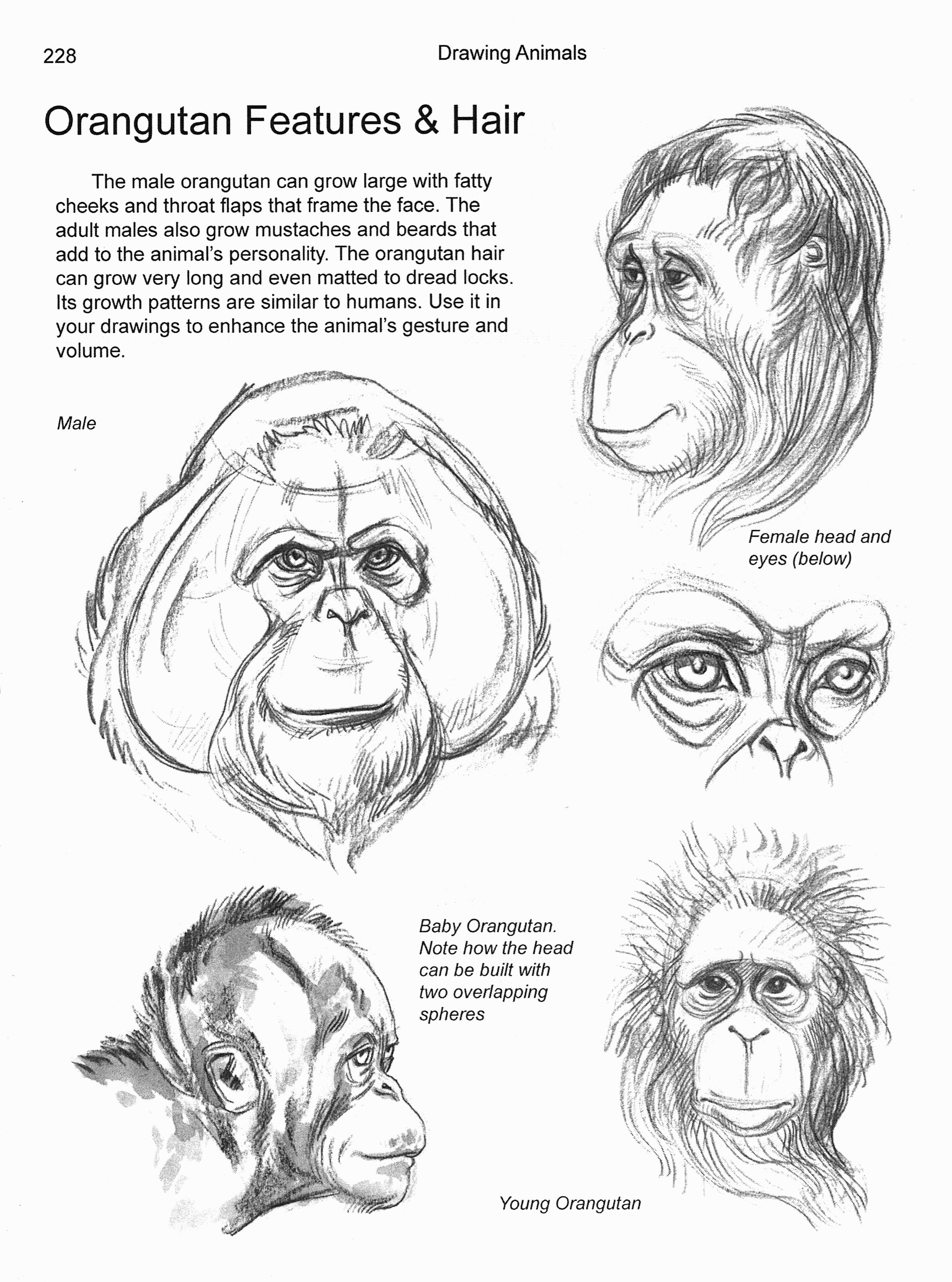 Apes & Primates Chapter 10