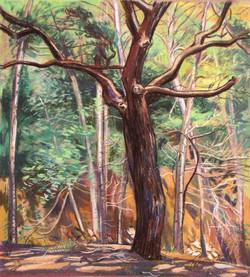 Sherwood Oak canopy & aspen