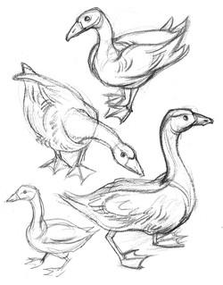 Bird Geese Fair Four