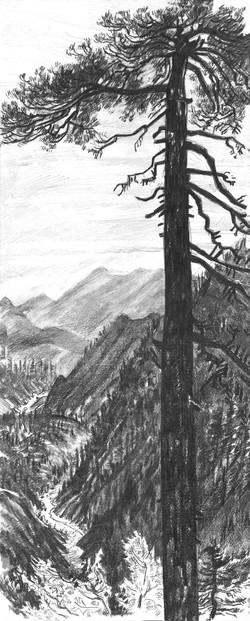 Baldy Ski Hut Pine & Canyon