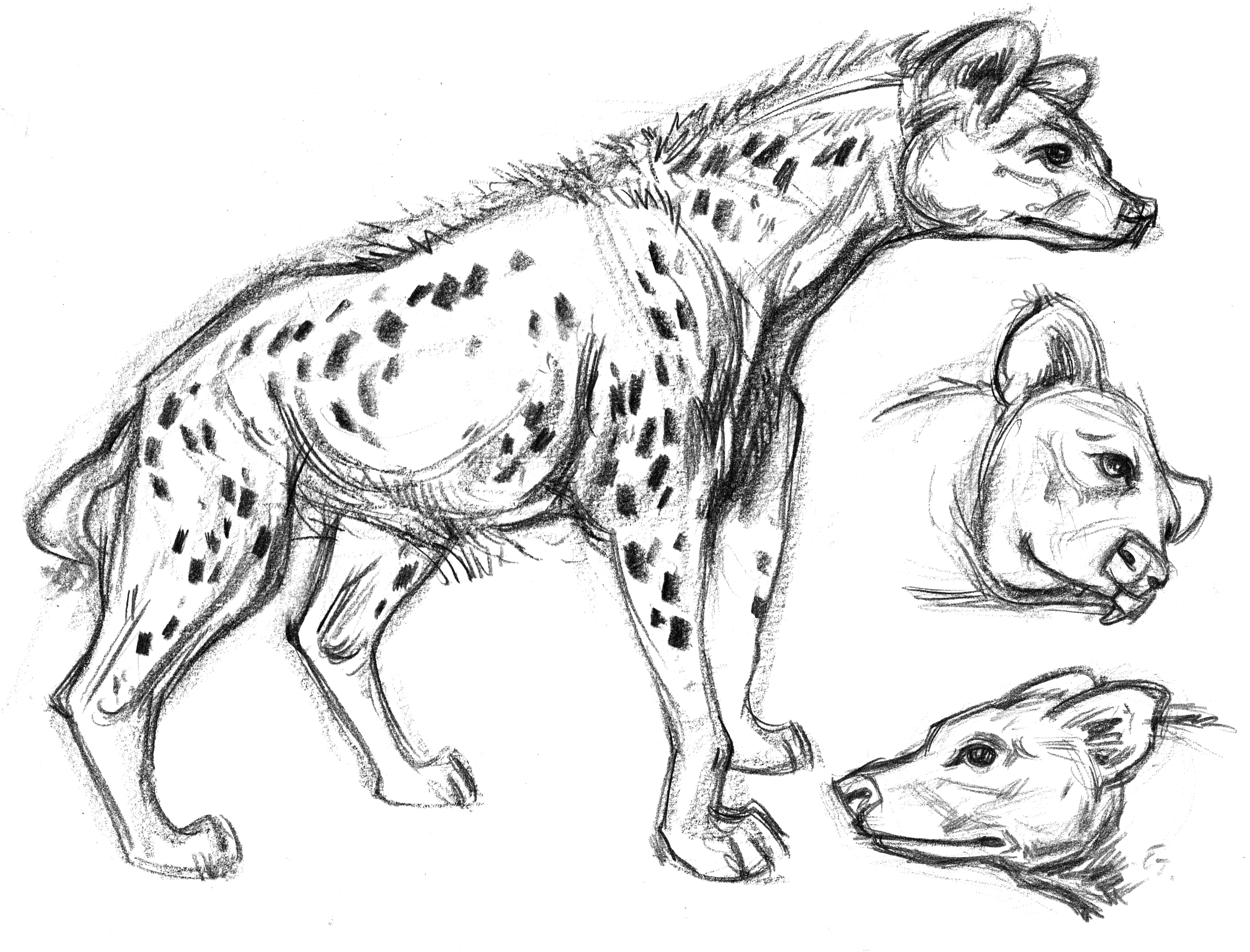 Hyena Upright SIDE 2 Heads