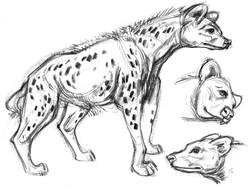 Hyena Upright SIDE 2 Heads