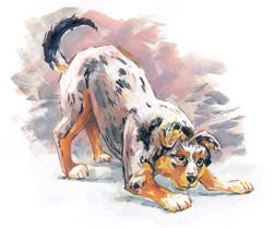 Dog Aussie Pup color
