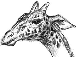 Giraffe Head Alpha SIDE