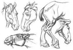 Horse Draft Heads & Hind SIDE