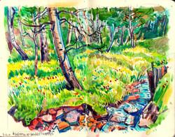 Aspens & Flowers Gayle Creek