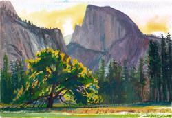 Yosemite Half Dome Halo Tree