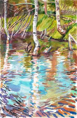 Green Cr Beaver Pond Reflection