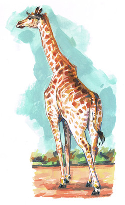 Giraffe BACK Color