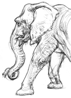 Elephant Wrinkles Body SIDE