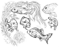 Fish Seaweed & pacific fish