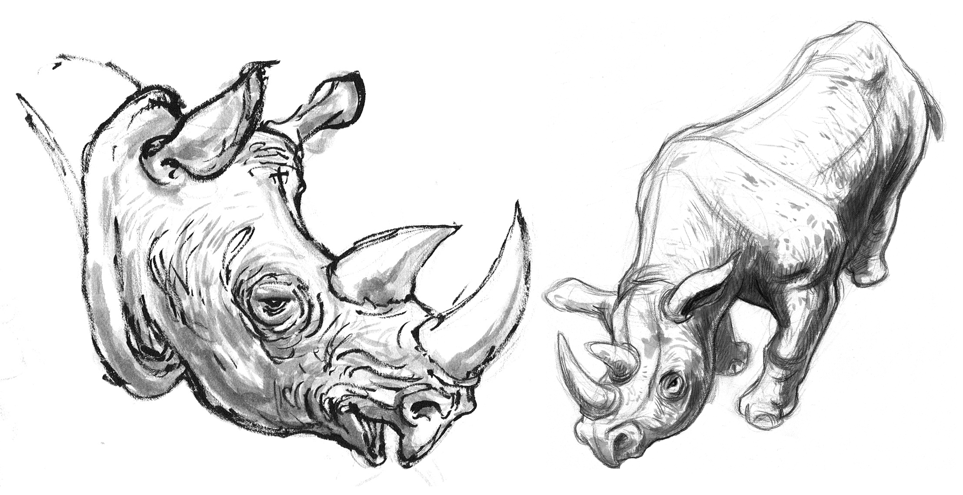 Rhino African Body & Head