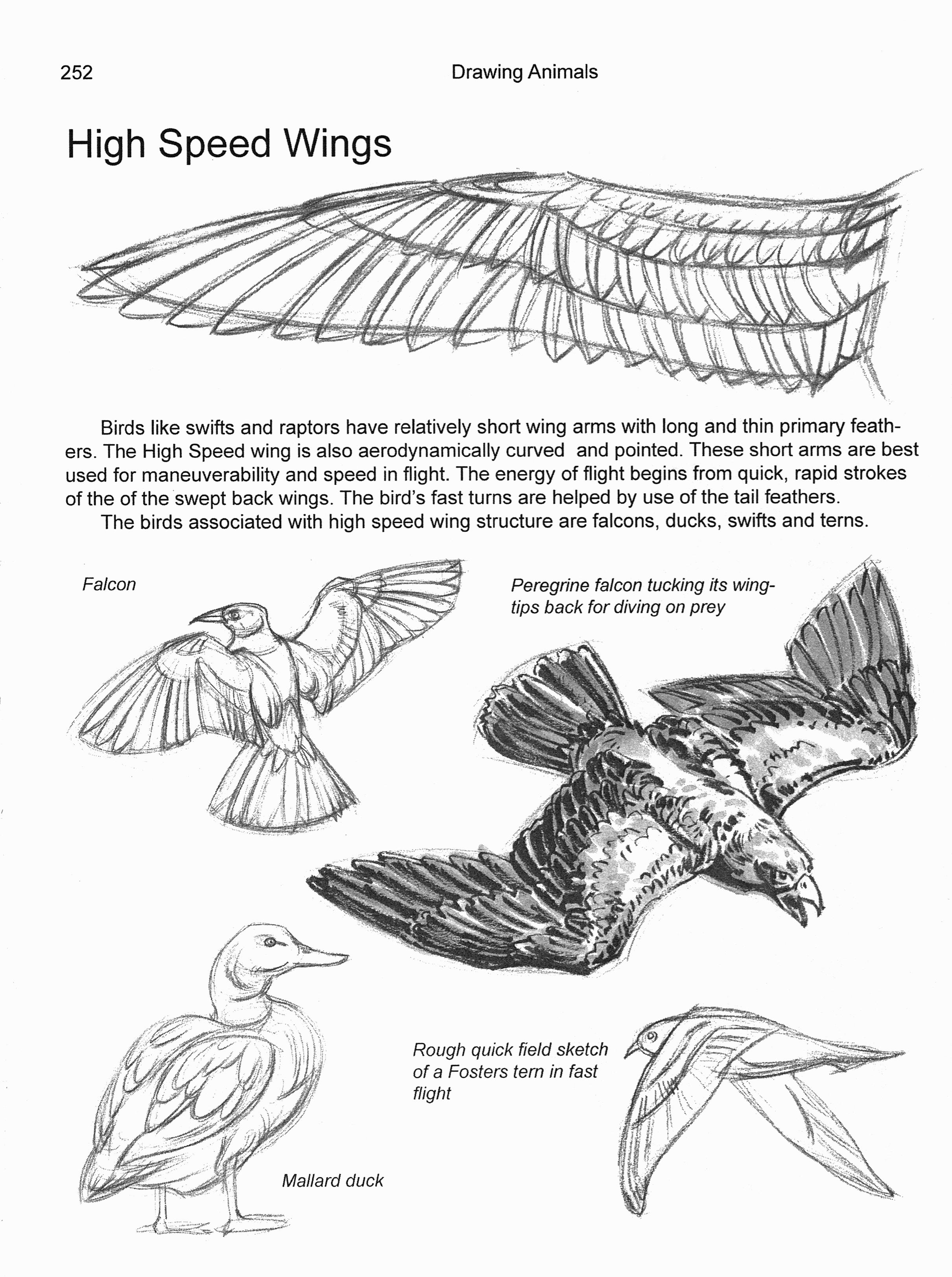 Birds & Flight Chapter 11