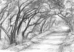 Sherwood Oak Row Curving Road