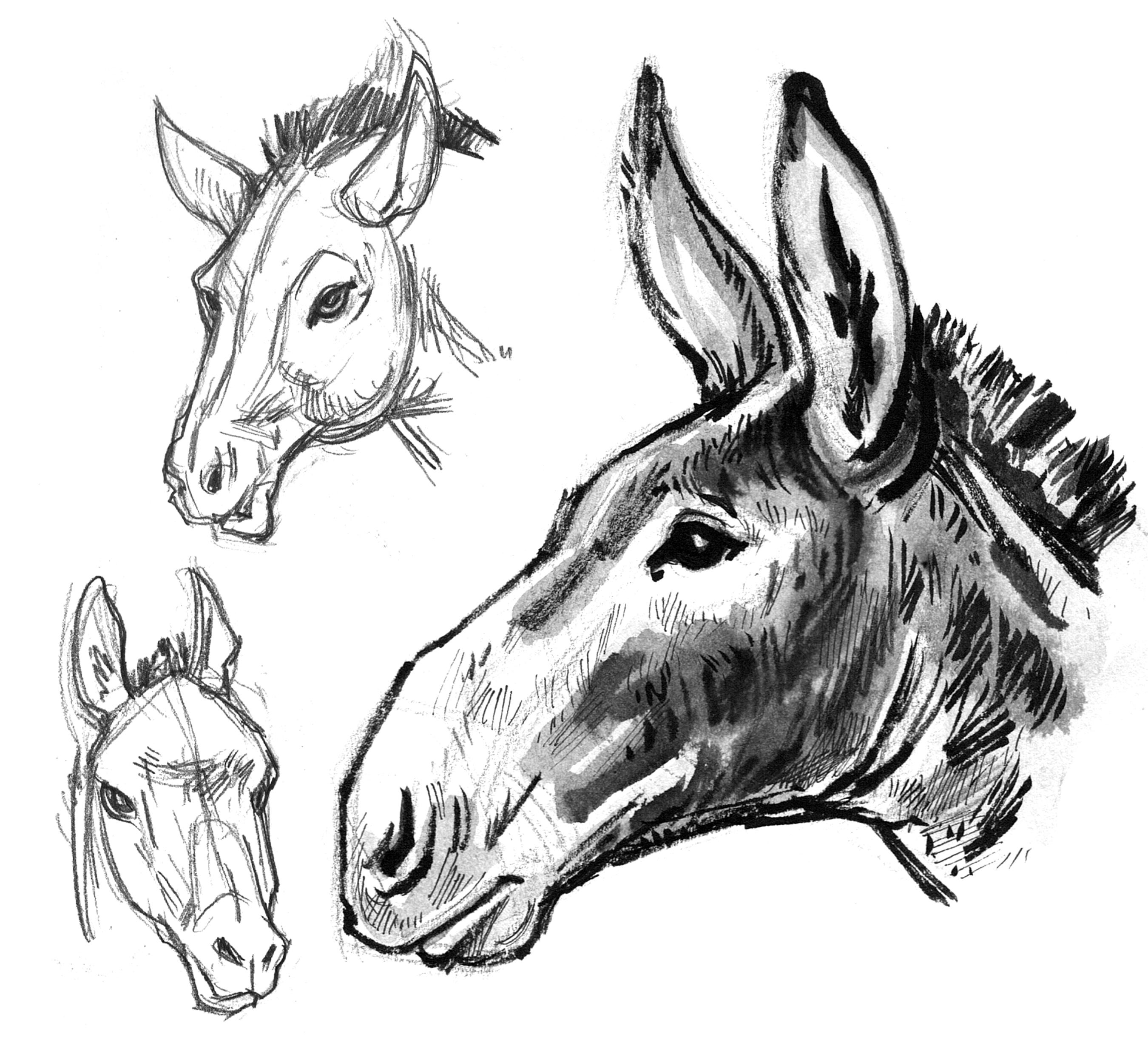 Mule Heads 3