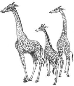 Giraffe 3 Family GROUP