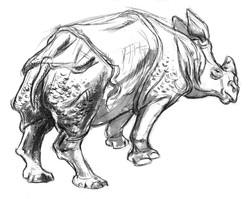 Rhino Indian Lumpy Back