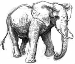 Elephant African Walk INK SIDE