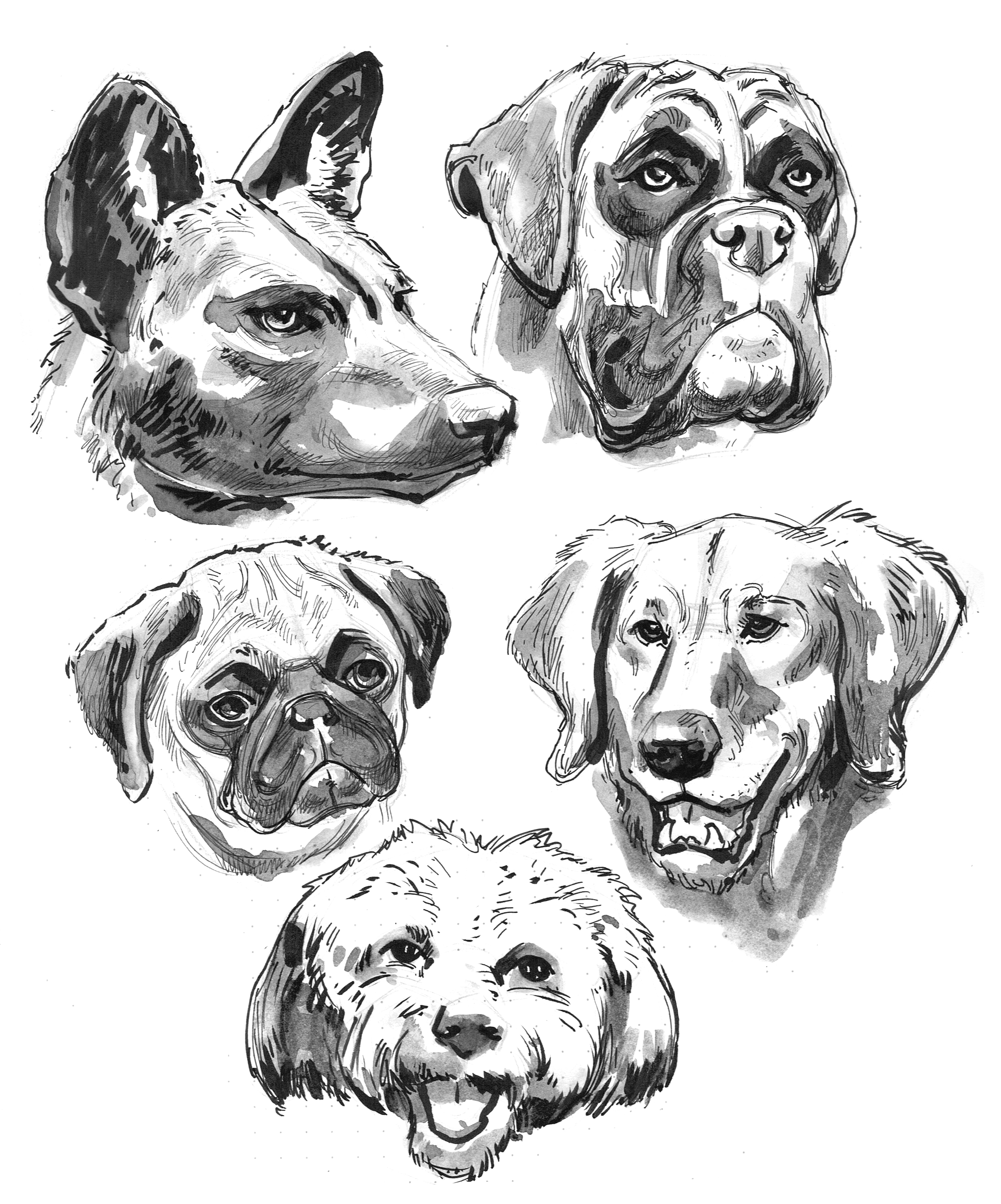 Dogs 5 Heads Various