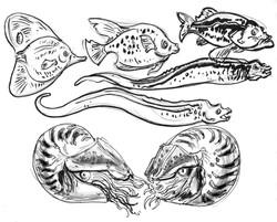 Nautilus Moreys & fish