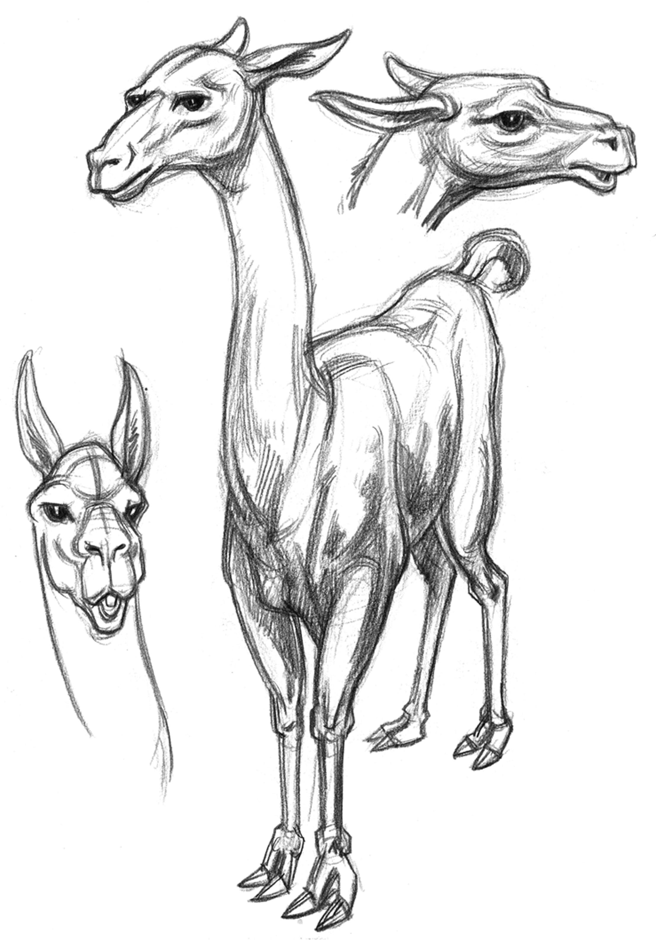 Llama Body Heads BW
