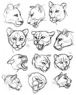 Cat Mt Lion Heads 12