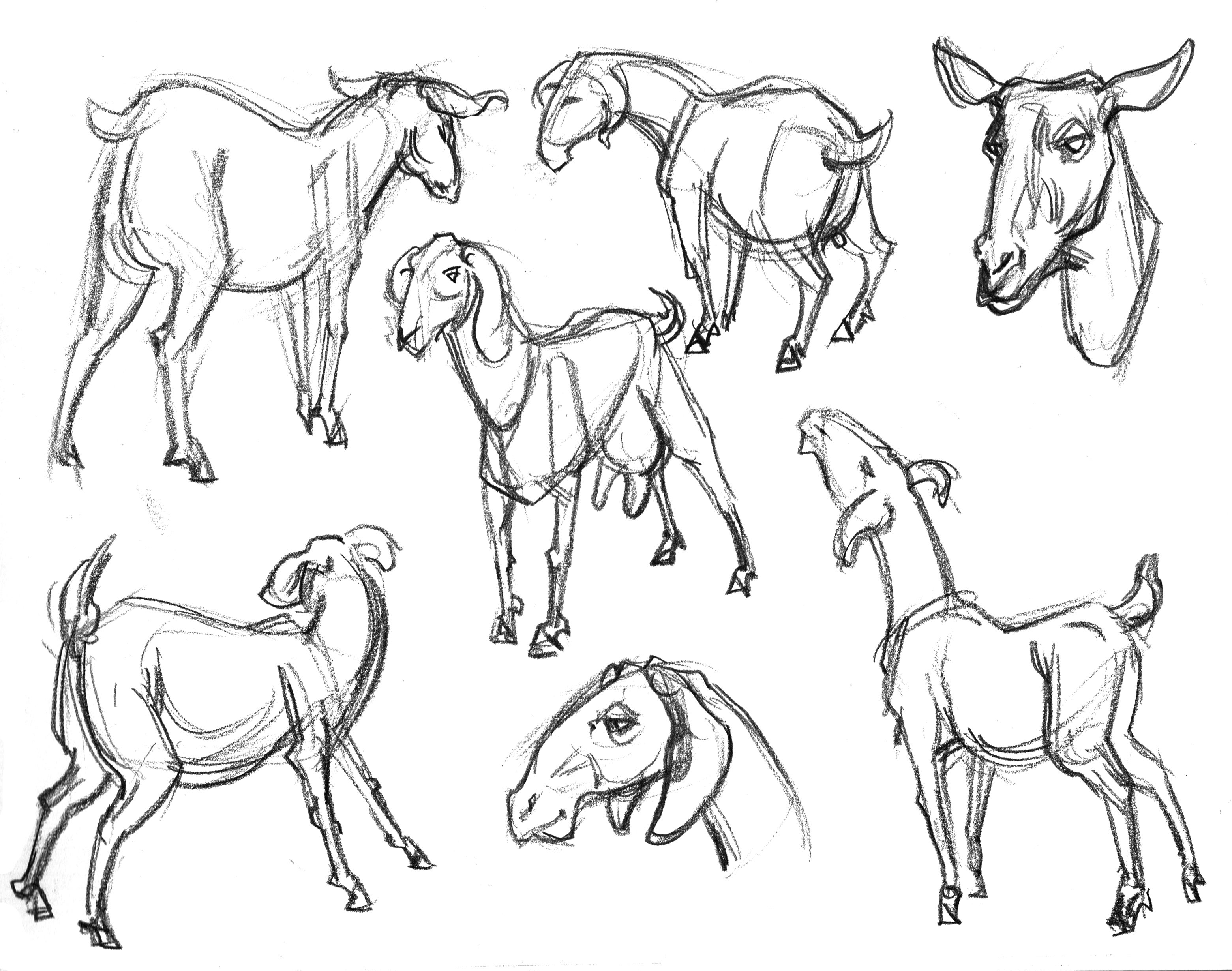 Herb Goats & Head Sketches