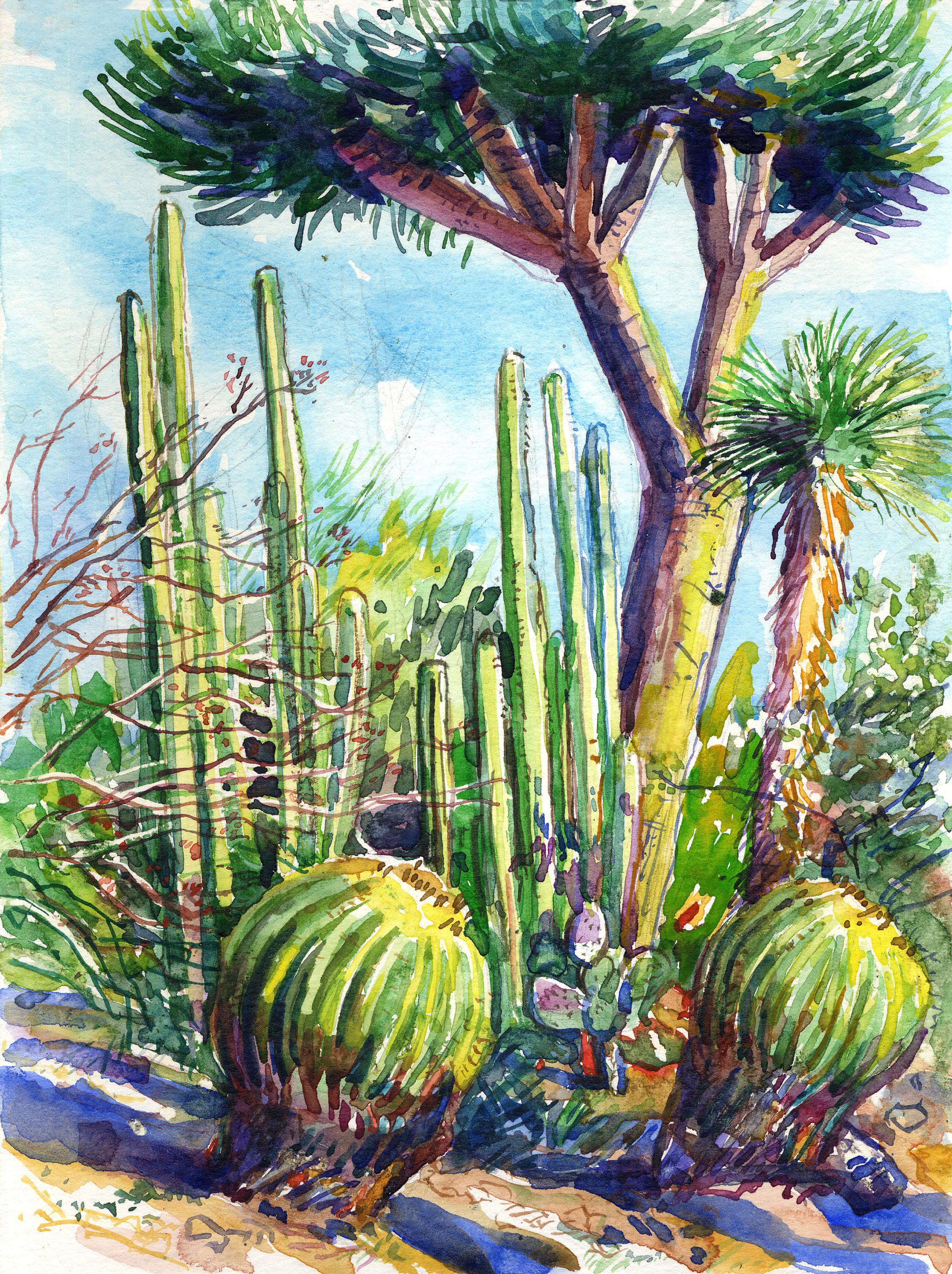 Barrel cactus & thorny tree