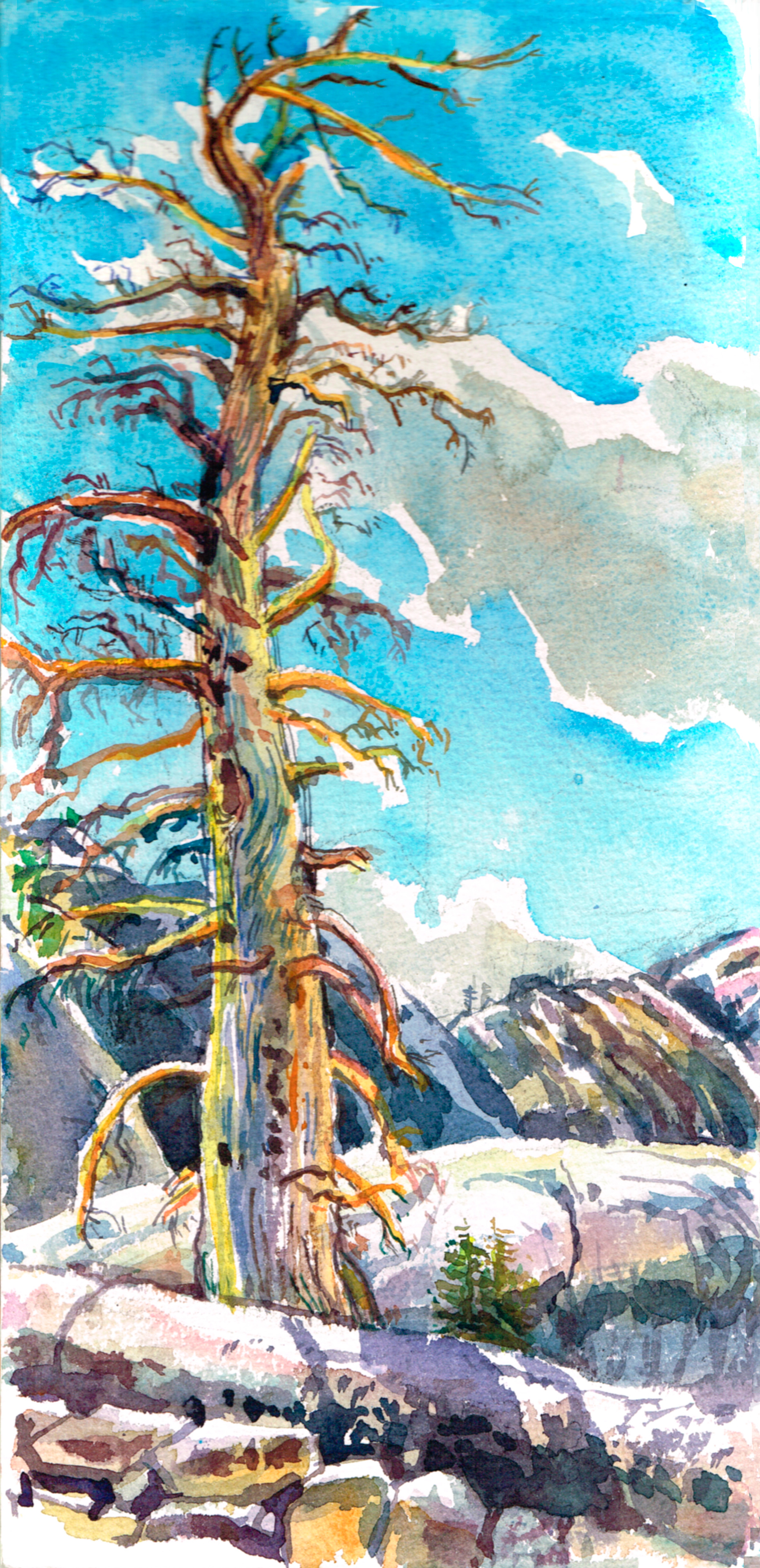 Dead Pine Mule Pass, Sierra