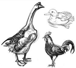 Bird Goose Rooster Duck