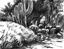 Cactus Bush Barrel & Trees