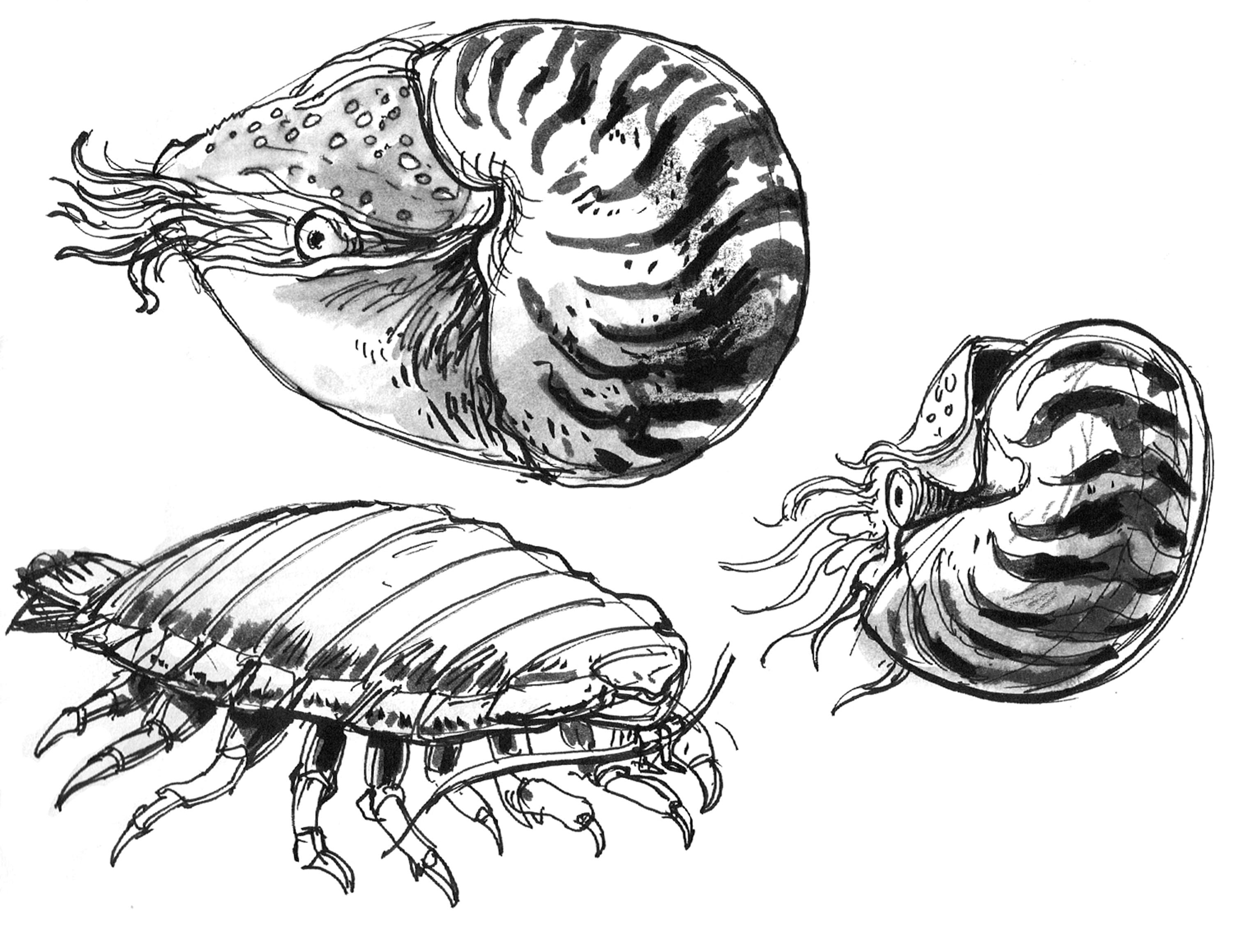 Nautilus 2 & Lopus
