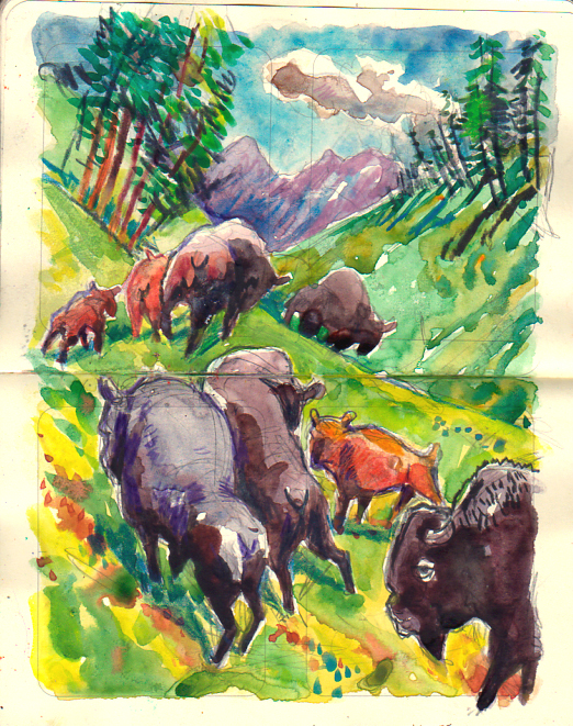Buffalo Herd Yellowstone