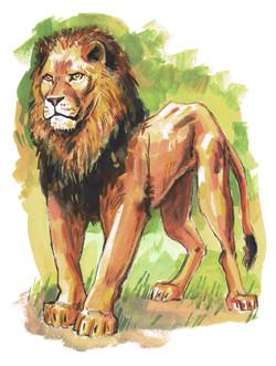Cat Lion Strong FRT Color