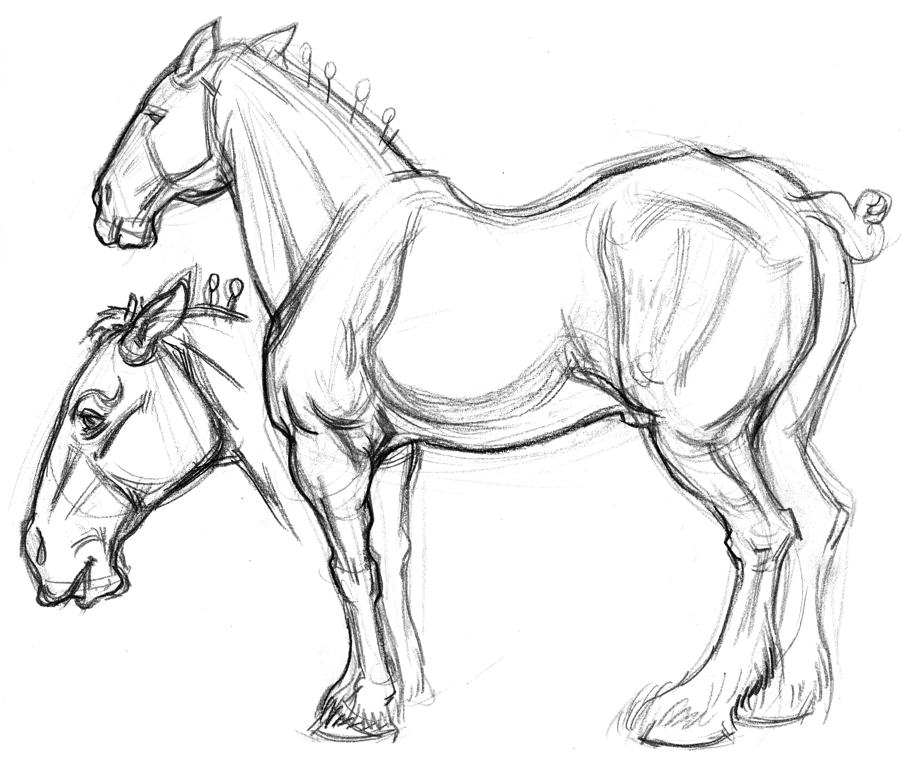 Horse Draft Buds Body & Head