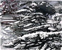 Koi Pond & Cypress