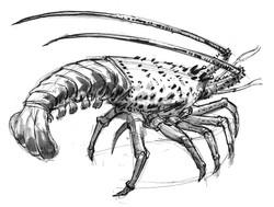 Lobster Profile INK