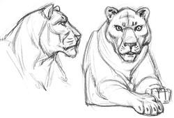 CAT Liger Body & Head