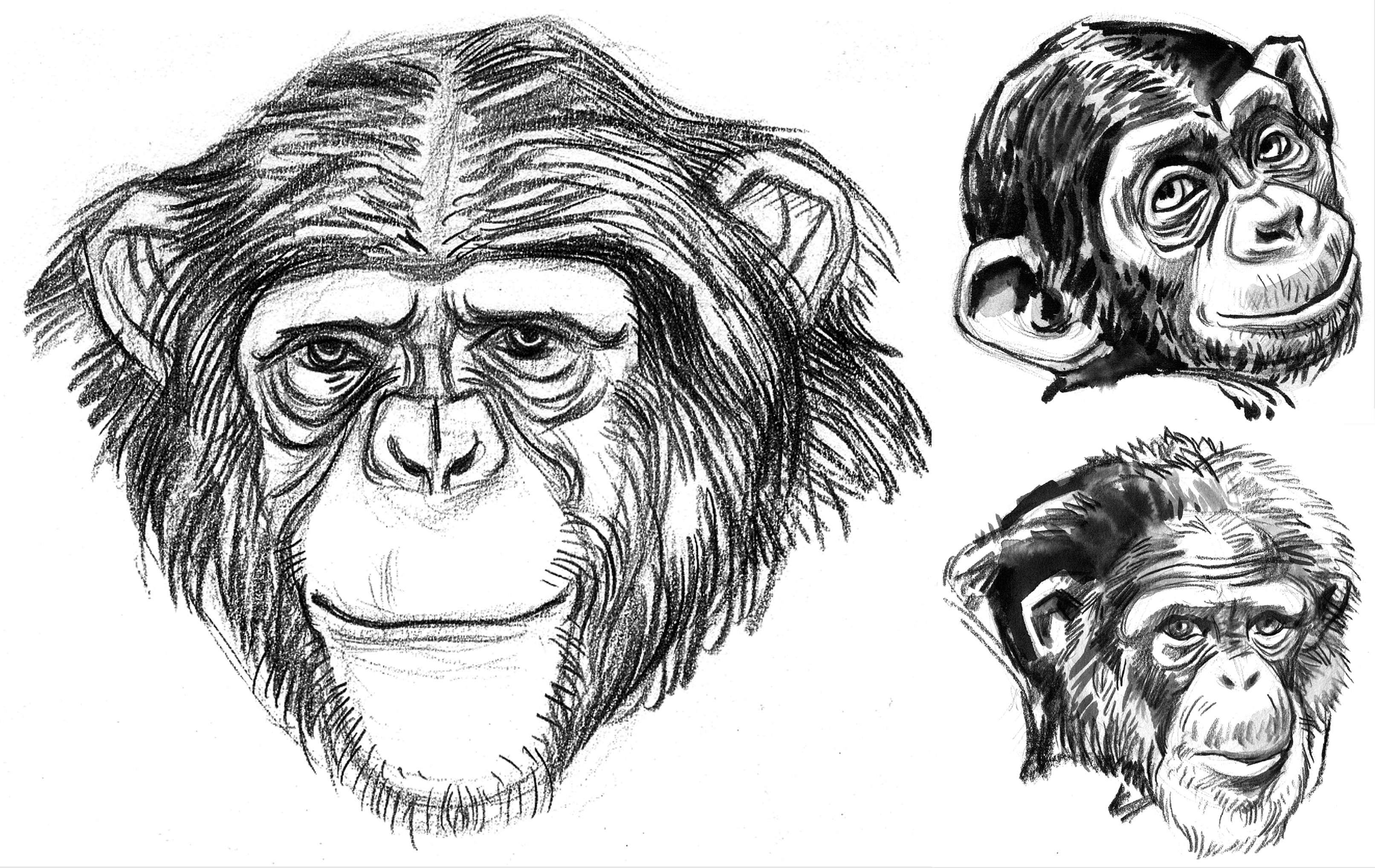 APE Chimps Grinning