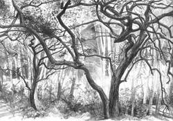 Sherwood Dark Twisted Oaks