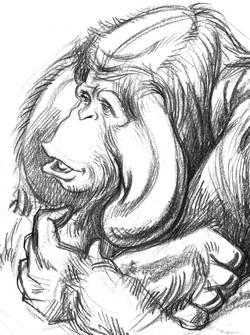 Ape Orangutan Head