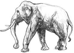 Elephant Walking INK SIDE