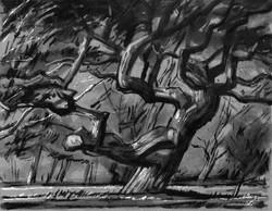 Big Twisted Oak in Storm