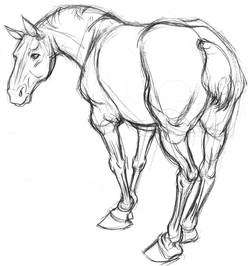 Horse Draft 3Quarter BACK