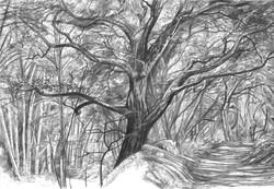 Sherwood - Big black Oak & Road