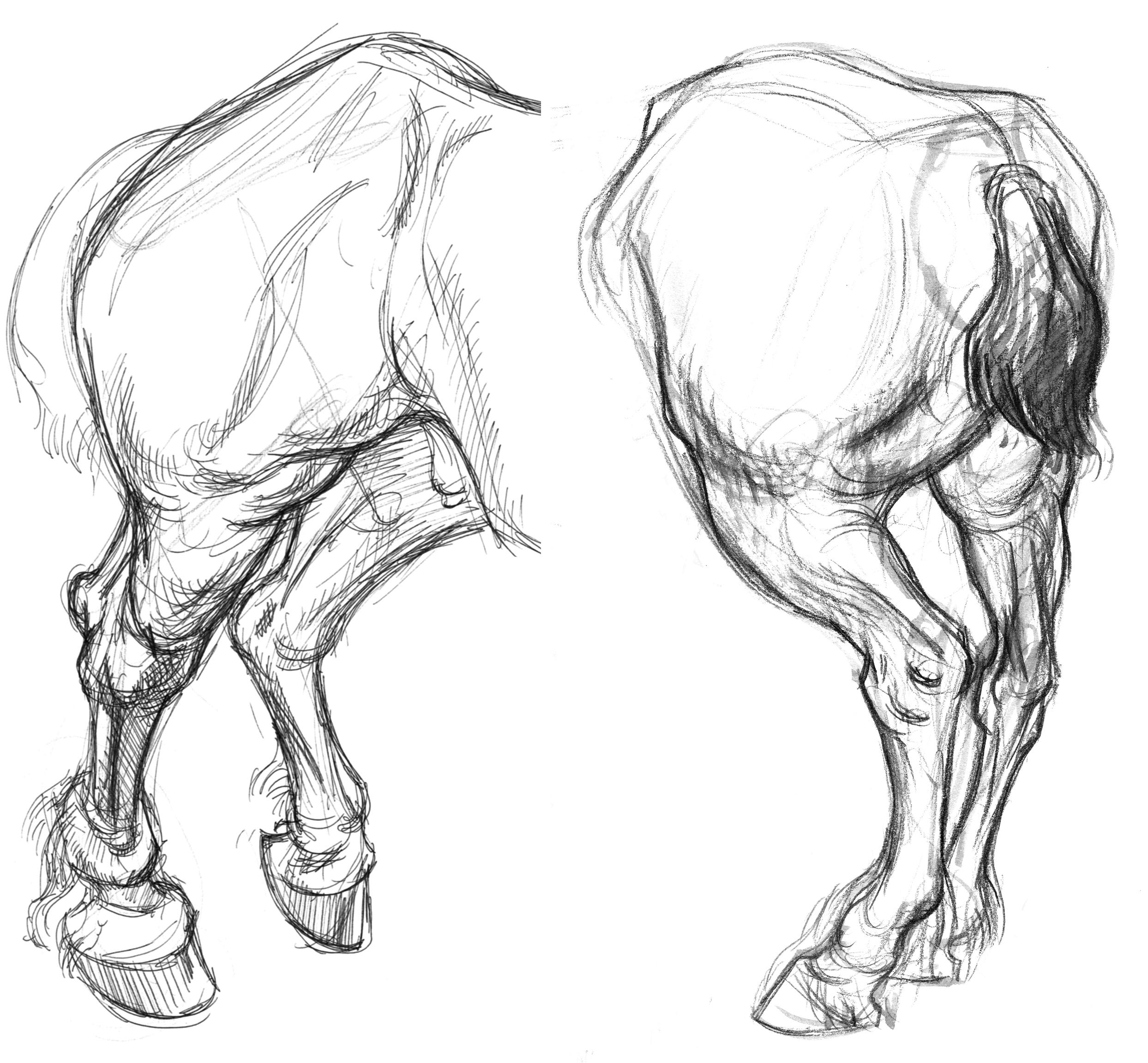 Horse Draft 2 Hind Legs