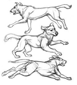 Dog 3 Collies run SIDE