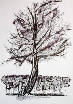 Alice's Tree, 2016