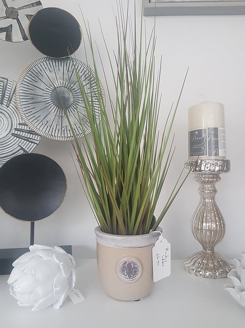 Small potted tall grass bush